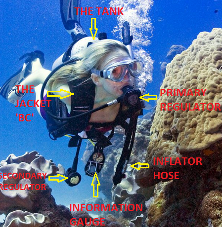 understanding scuba dive equipment
